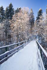 Fir-tree under a snow. Portrait composition.