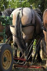 Landarbeit mit Pferden