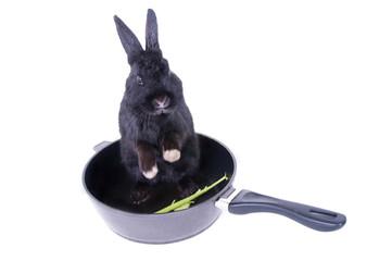 Kaninchen in der Bratpfanne