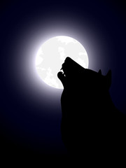wolf on night time