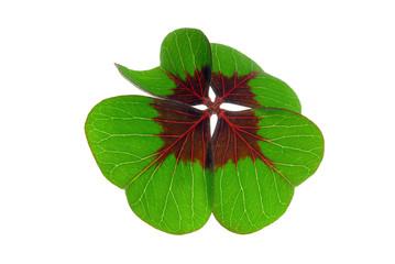 Glücksklee - four leafed clover 20