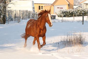 Petit trot dans la neige