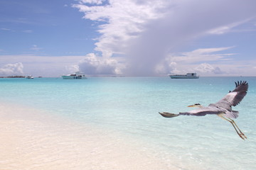 Maldivas, Playa bonita