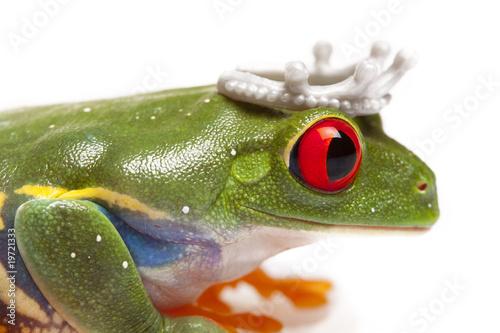 Fototapeten,frosch,printmedien,princess,crown
