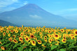 Mount Fuji with Sunflowers