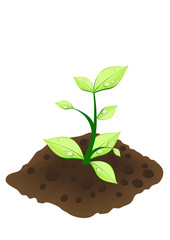 Vector illustration of small green plant