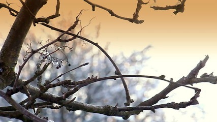Blackbird Flies Away From Tree