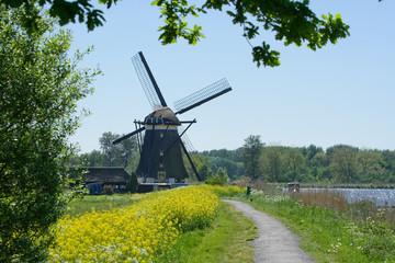 Dutch mill in spring