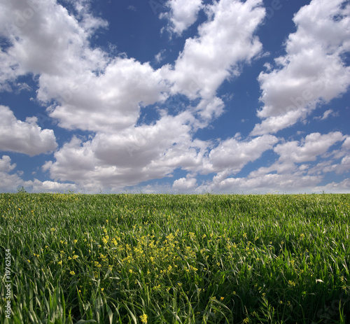 green grass and blue cloudy sky