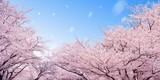 Fototapety 桜