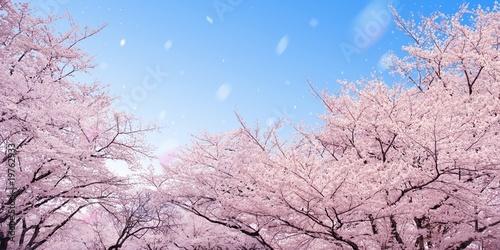 Aluminium Kersen 桜
