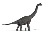 Brachiosaurus Size Compared to Man poster