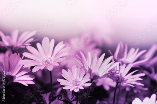 Staande foto Lilac Pink floral background