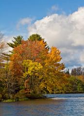 Autumn Tree in Catskill Mountain