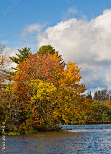 Autumn Tree in Catskill Mountain