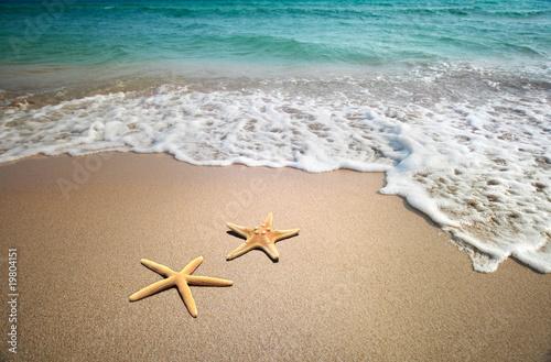 Leinwandbild Motiv two starfish on a beach