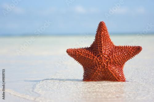 Big red starfish