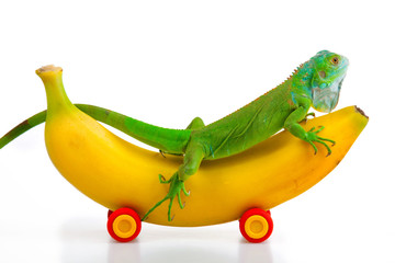 Iguana on Banana Mobile