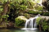 Fototapety Rainforest waterfall