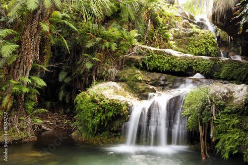 Fototapete tropischer regenwald  400_F_19824757_c8VcNNLvmANmtk4qwozZlIiNy7bi32vV.jpg