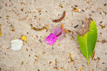 leaves of trees and flowers are lying on the beautiful  beach