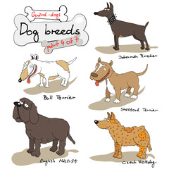 dog breeds 4