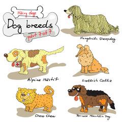 dog breeds 7