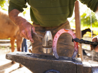 Farrier Holding Hot Horseshoe With Tongs on Anvil