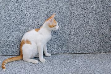 red white sitting cat