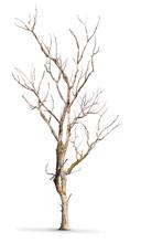 Martwy pień drzewa na białym tle - klimat