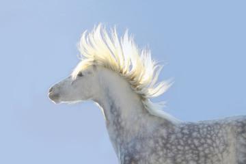 sun in horse mane