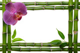 Bamboo frame and orchid