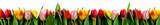 rang de tulipes - 19871376