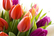 canvas print picture - Dutch tulips