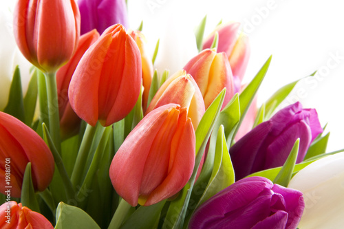 canvas print picture Dutch tulips