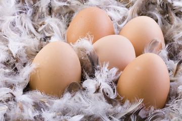 Eier auf Federn