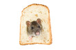 curious rat looking through hole in sandwich bread