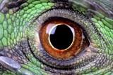 water dragon eye
