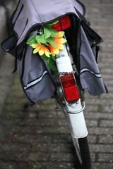 Bike in Amsterdam, Netherlands