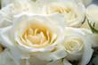 Fototapeten,rosen,hochzeit,weiß,blume
