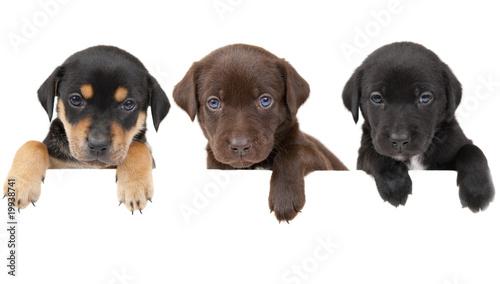 Puppies banner