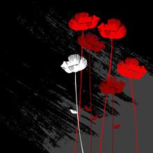 Kwiatów w tle, mak z miejsca na tekst