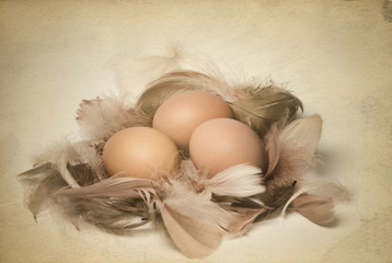 Vintage photo of eggs and feathers