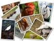 Farm Animal..