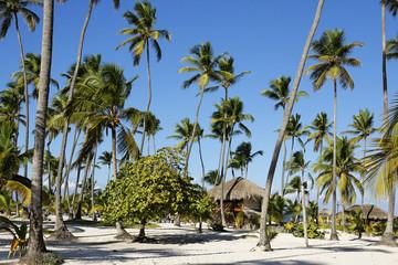 les belles plages de la république dominicaine