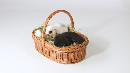 Cute baby Easter rabbits in basket