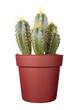 cactus house plant vegetation nature flora