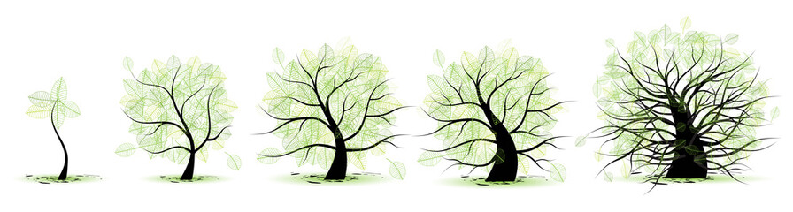Life stages of tree:childhood,youth,adulthood,old age