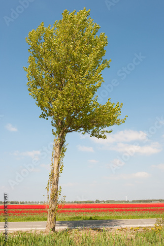 Dutch landscape in spring