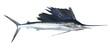 Leinwandbild Motiv Sailfish real fish isolated on white